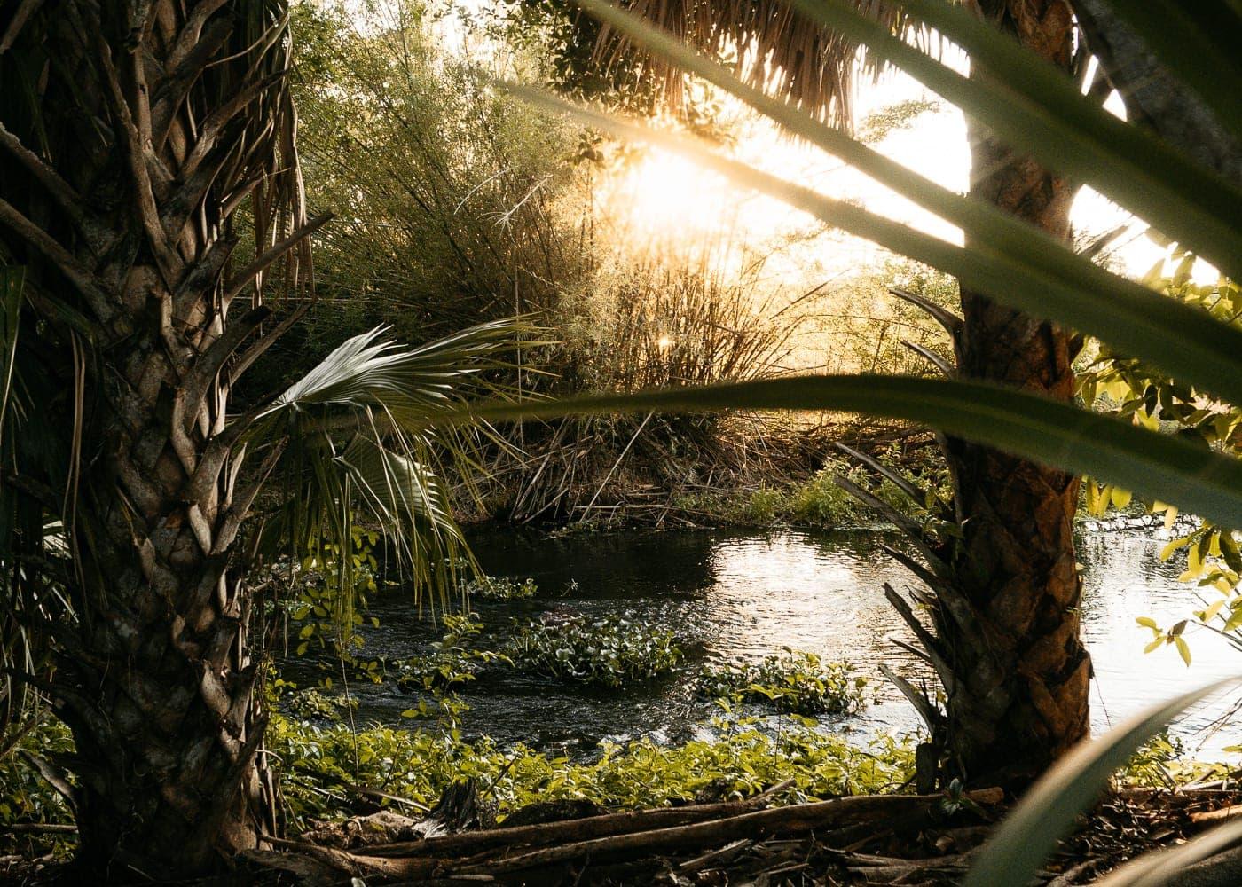 PyramidsinFlorida Jungle Park