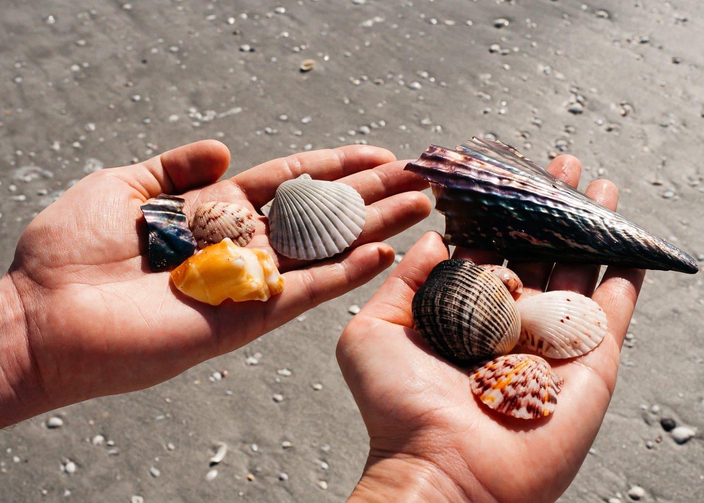 Collecting shells at Sanibel Island